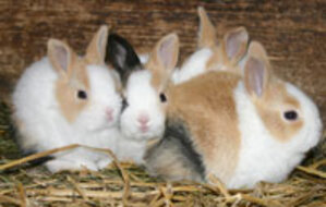 EU bans animal testing for cosmetic ingredients.