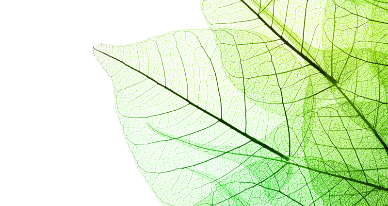 An image of a leaf