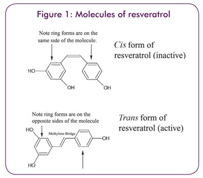 Figure 1: Molecules of resveratrol