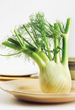 fennel