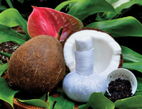 Beauty Secrets's Coconut Poultice