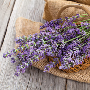 Fall Back In Love With Lavender