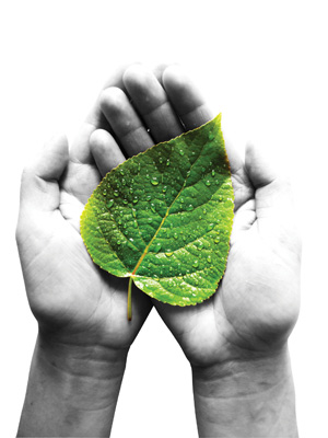 hands holding green leaf