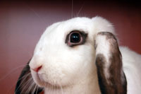 China Revising Mandatory Animal Testing Requirements